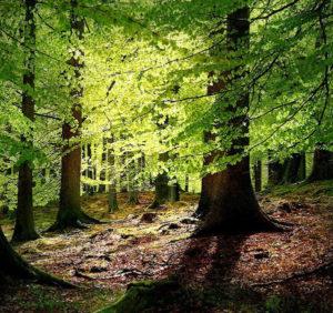 ...Holtz bietet große ökologische und klimarelevante Vorteile ., bild U+E